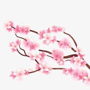 Blossom PNG HD Quality PNG Clip art