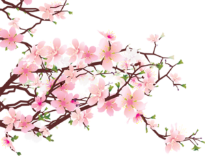 Blossom PNG Image HD PNG Clip art