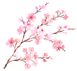 Blossom PNG Transparent Images PNG icon