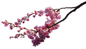 Blossom PNG Transparent Photo PNG Clip art