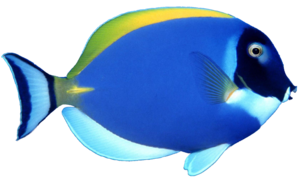 Blue Fish PNG File PNG Clip art