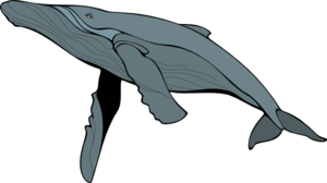 Blue Whale PNG Free Download PNG Clip art