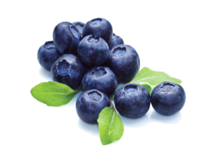 Blueberry PNG File PNG Clip art