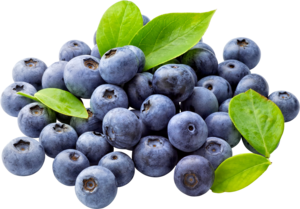 Blueberry PNG Free Download PNG Clip art