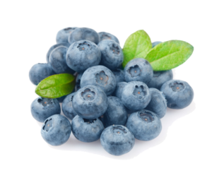 Blueberry PNG Photo PNG Clip art
