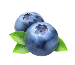 Blueberry PNG Photos PNG Clip art