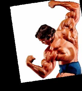Bodybuilding Transparent Background PNG Clip art