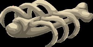 Bones PNG Free Download PNG Clip art