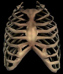 Bones PNG Transparent Image PNG Clip art