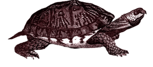 Box Turtle PNG Clipart PNG Clip art