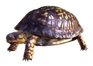 Box Turtle PNG Free Download PNG Clip art