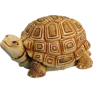 Box Turtle Transparent Background PNG Clip art