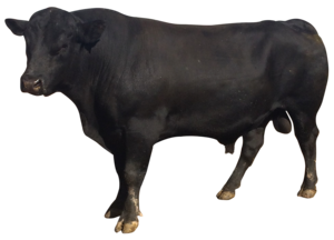 Bull PNG Picture PNG Clip art
