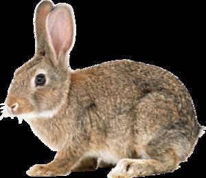 Bunny PNG File PNG Clip art