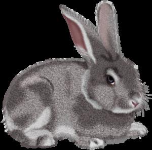 Bunny PNG PNG Clip art