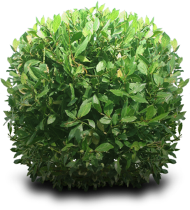 Bushes PNG Free Download PNG Clip art