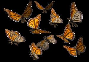 Butterflies Swarm Transparent Background PNG Clip art