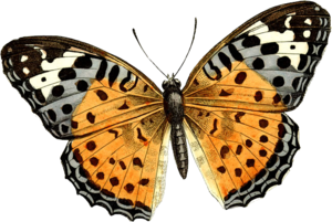 Butterfly PNG PNG Clip art
