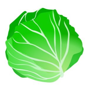 Cabbage Clip Art PNG PNG Clip art