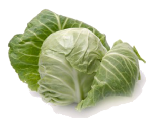 Cabbage PNG PNG Clip art