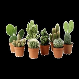 Cactus Plant PNG Clipart PNG Clip art