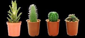Cactus Plant PNG Image PNG Clip art