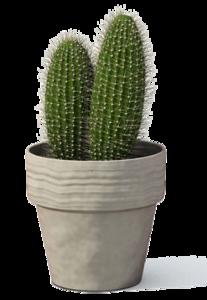 Cactus Plant PNG Transparent Image PNG Clip art