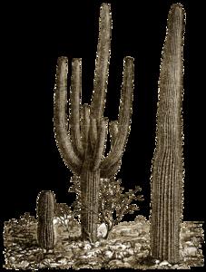 Cactus PNG Photos PNG Clip art