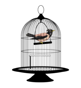 Caged Bird PNG Free Download PNG Clip art