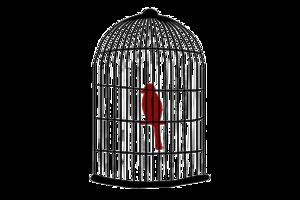 Caged Bird Transparent Images PNG PNG Clip art