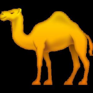 Camel PNG HD PNG Clip art
