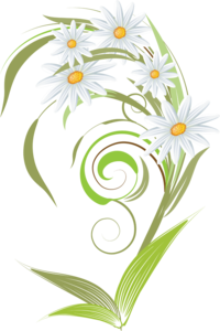 Camomile Art PNG PNG Clip art