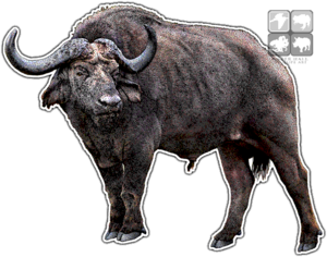 Cape Buffalo PNG Clipart PNG Clip art