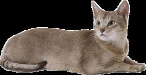 Cat PNG Free Download PNG Clip art