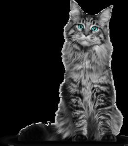 Cat PNG Photos PNG Clip art