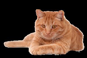 Cat PNG Pic PNG Clip art