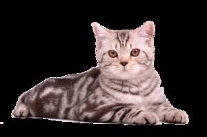 Cat Sitting PNG PNG Clip art