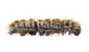Caterpillar PNG HD PNG Clip art