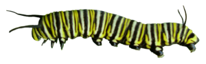 Caterpillar PNG Pic PNG Clip art