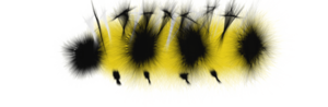 Caterpillar Transparent PNG PNG Clip art