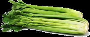 Celery PNG Clipart PNG Clip art