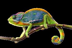 Chameleon PNG File PNG Clip art