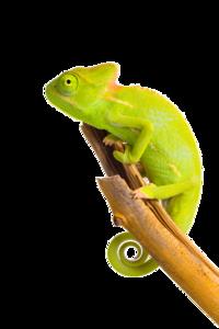 Chameleon PNG Image PNG Clip art