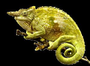 Chameleon PNG Photo PNG Clip art