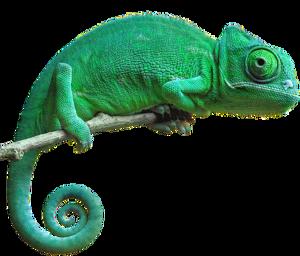 Chameleon PNG Pic PNG Clip art