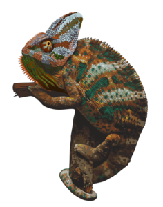 Chameleon PNG Picture PNG Clip art