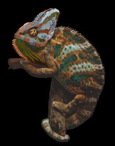 Chameleon PNG Picture PNG Clip art