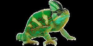 Chameleon PNG Transparent Picture PNG Clip art