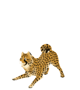 Cheetah PNG Clipart PNG Clip art