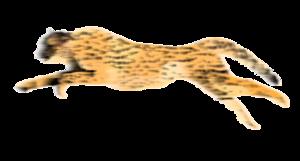 Cheetah PNG HD PNG Clip art